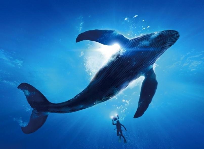 Медитация, встреча с китом